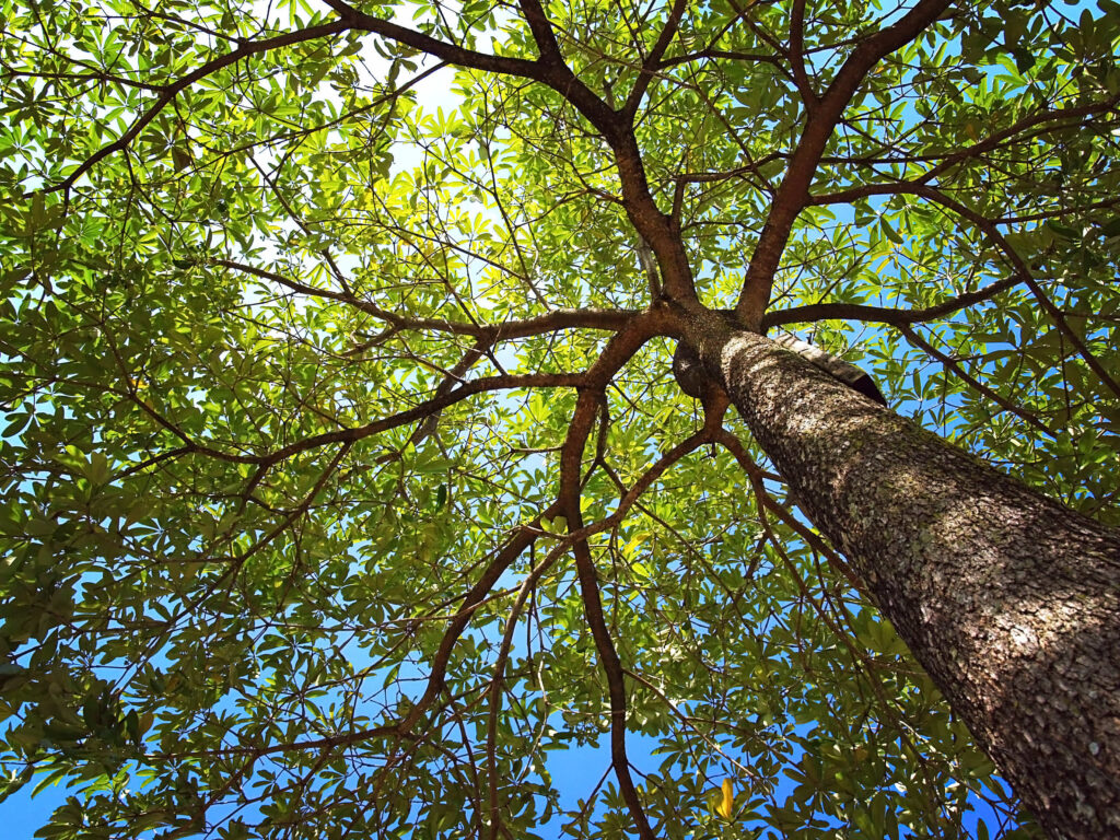 , Tree Burial: Everything You Need To Know